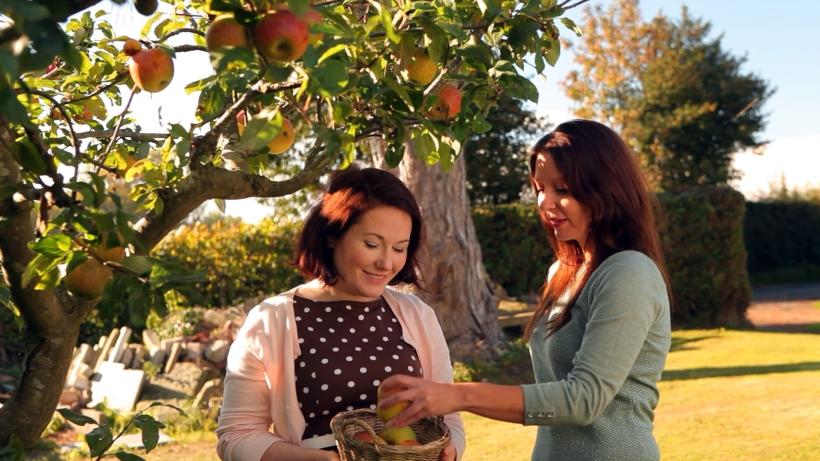 NM Intro apple pick rev