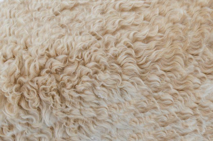 background-beige-brown-317333