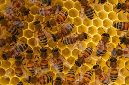 bees-beeswax-